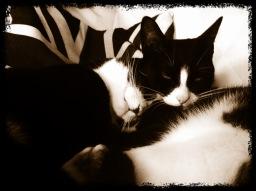 Cat Sitter Camden