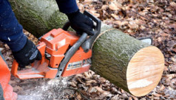 tree services didcot
