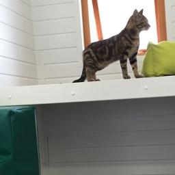 Cat On Heated Shelf
