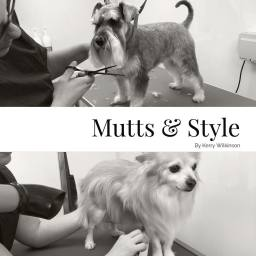 Professional Dog Groomer in Doncaster