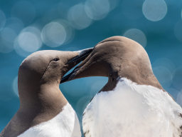 led trips to the Farne Islands