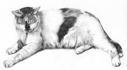 Cat portrait pencil drawing