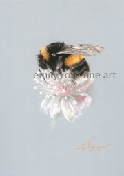 Bumble Bee on Flower Drawing