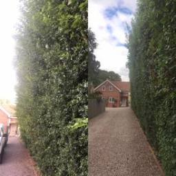 Hedge cutting Atherstone