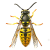 Pest Control Herefordshire