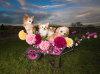 Spellhound Dog Photography