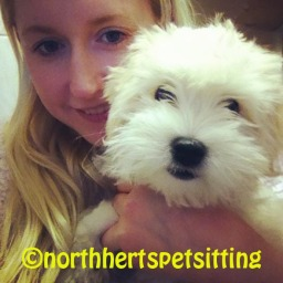 sam owner north herts pet sitting hitchin dogs