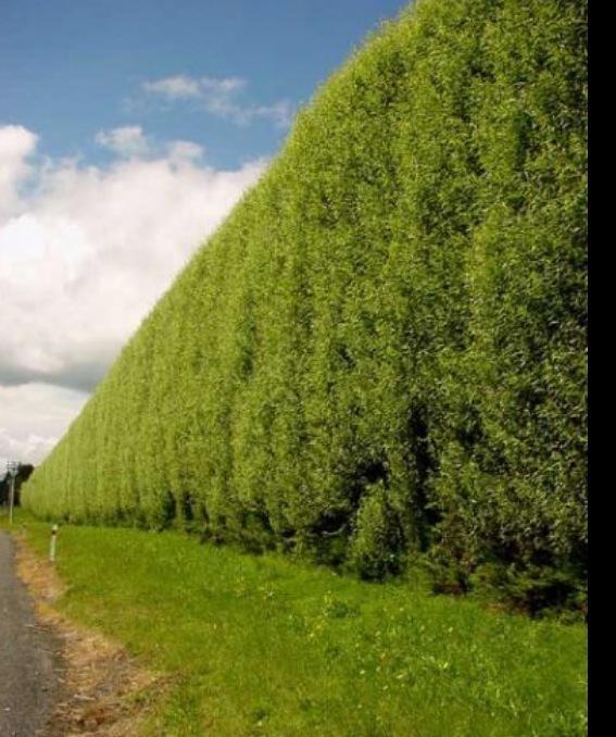 Landscape Design Surrey: Surrey Landscapes & Tree Specialist In Portsmouth Road