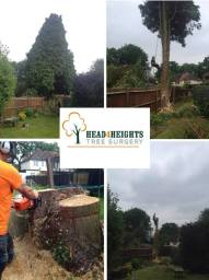 tree removal in Worthing
