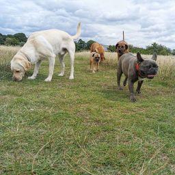 Loyal Paws dog walking morden