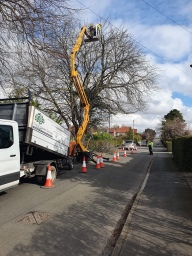 tree work grimsby