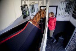 Dayrider Horsebox - Horse Area