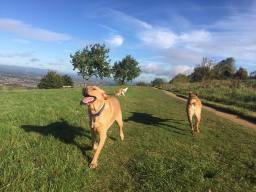 Bright Eyes Dog Care Walk
