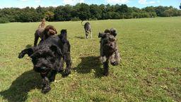 Wandsworth Dog Walker