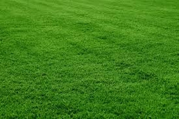 Suppliers of Quality Lawn Turf