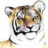 Tiger Engineering