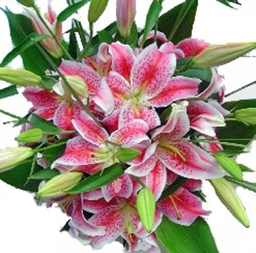 Send Pink Lilies £27.50 + £5.00 delivery