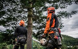 Top Tree Surgeons Bristol at work
